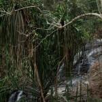 ランカウイ島 No.1 Langkawi, Malaysia -Durian Perangin Waterfall, Tangjung Rhu Beach-  Hidemi Shimura