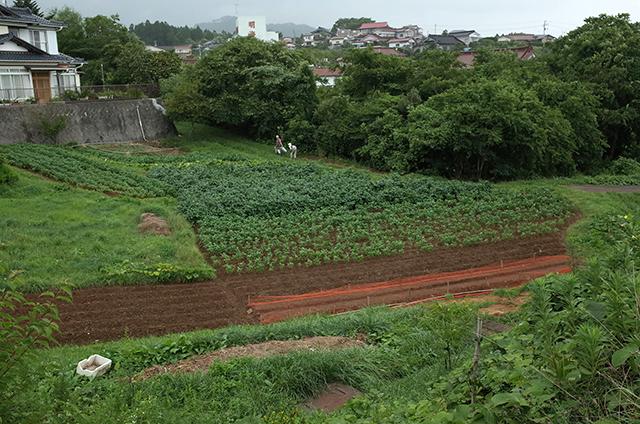 気仙沼大島 -散歩中の風景3-  Hidemi Shimura
